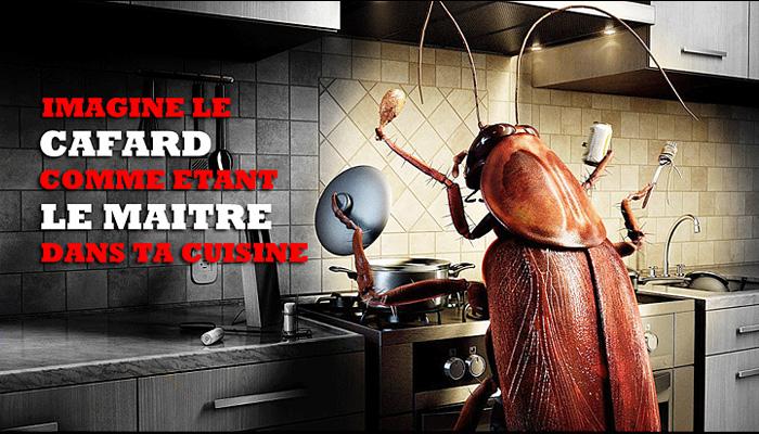 le calvaire d 39 une vie avec les cafards ces insectes qui s invitent sans autorisation la maison. Black Bedroom Furniture Sets. Home Design Ideas
