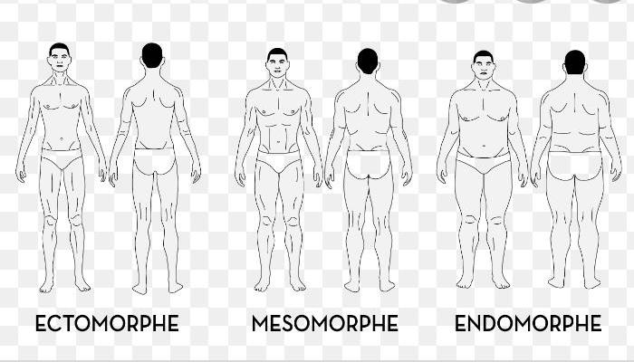 Morphologie des hommes